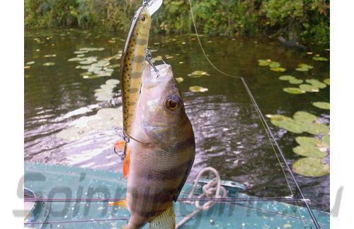 Воблер Zipbaits Rigge 90F 810 - фотография загружена пользователем 1